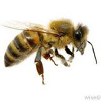 BeeCasso Live Bee Removal