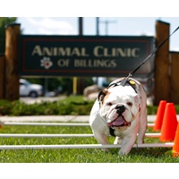 Animal Clinic of Billings