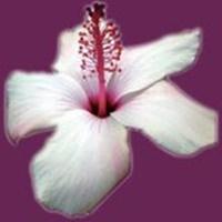 National_winners - Florists