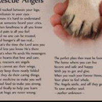 Angel Paws Pet Rescue