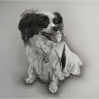Bon Chien Pet Care Services