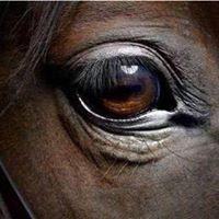 North Jersey Equestrian Center