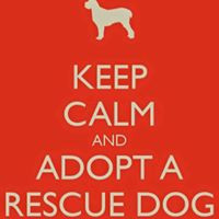 Pawsitively Furever Dog Rescue