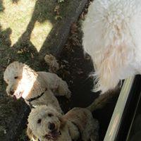 The Furry Godmother Pet Sitting and Dog Walking – Mahwah, NJ