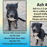 Mineral Wells Animal Shelter