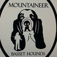 Mountaineer Basset Hounds