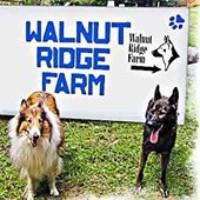 Walnut Ridge Farm