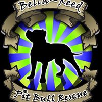 Bella-Reed Pit Bull Rescue