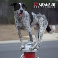 Sit Means Sit Southern Raleigh