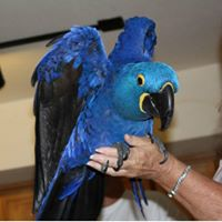 Macaw Parrots and Hyacinth parrots for sale