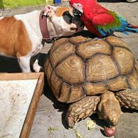 Pet Care Inc.