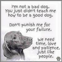Way of a Dog